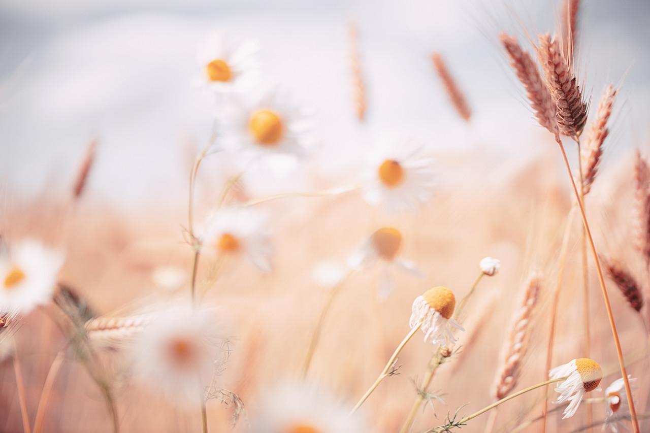 """""""Every flower must grow through dirt."""""""